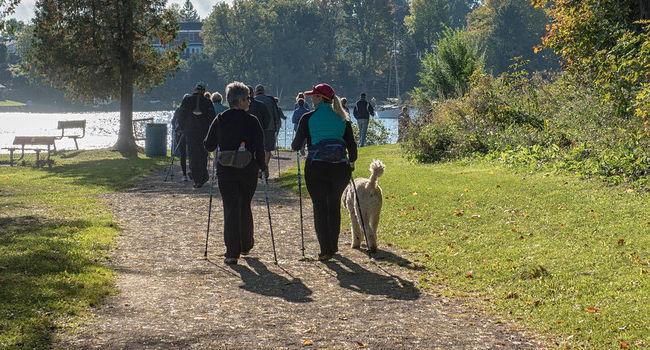 CINOFILIA, CORSO TECNICI E ISTRUTTORI PER DOG NORDIC WALKING