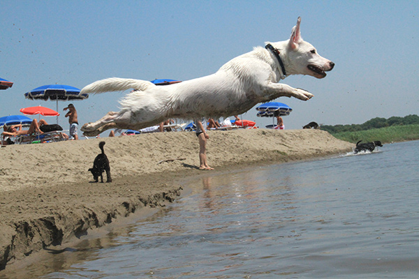 CINOFILIA, CON AICS E BAUBEACH VILLAGE IL CORSO PER DOG MANAGER IHOD ©