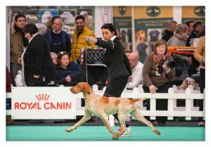 BRESCIA, 23 APRILE: I CANI DEL ROCCOLINO DOG COUNTRY ALL'ESPOSIZIONE MONDIALE @ Brescia